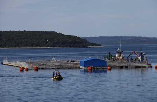 Vivero de salmónidos en el sector de San Antonio, Quellón, Chiloé (Foto de contexto. Créditos: Editec)