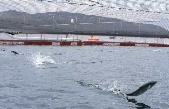 Centro de cultivo de salmones en la región de Aysén (Foto de contexto)