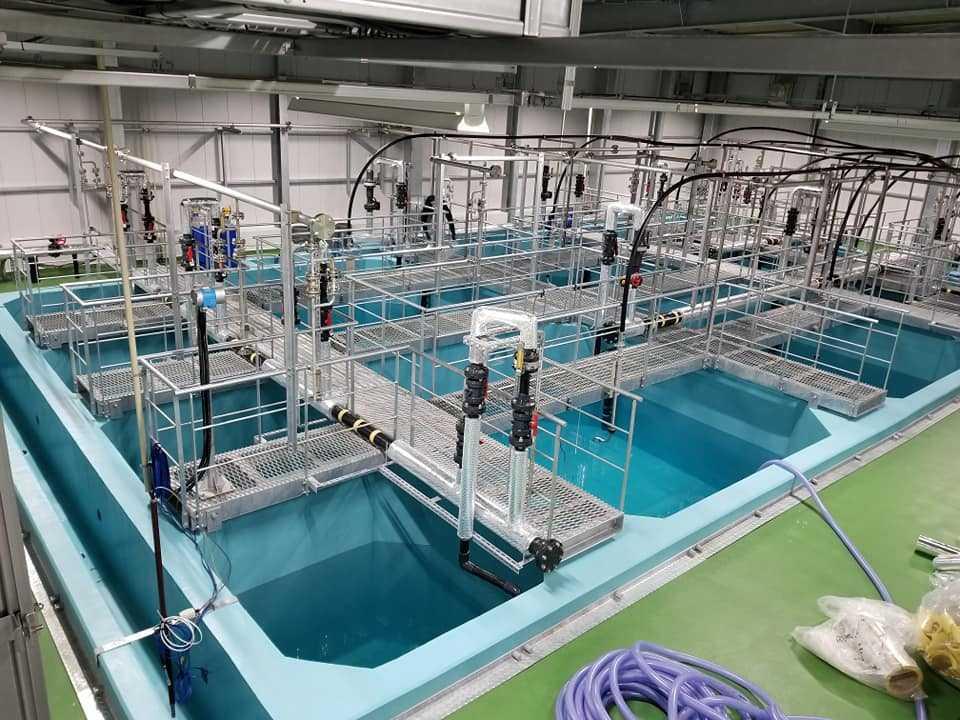 Japón: Apuestan por el cultivo de salmón en tierra