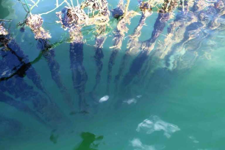 La posición de los mitilicultores frente a proyecto de ley sobre sedimentos (Foto: Cetmis Los Lagos)