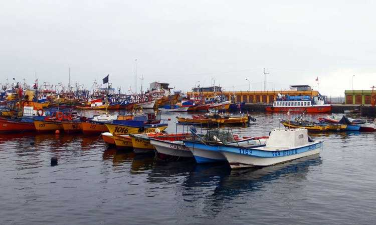 Pescadores podrán capturar palometa con bolinche