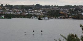 Por socavón: Anuncian trabajos en rampa de Dalcahue