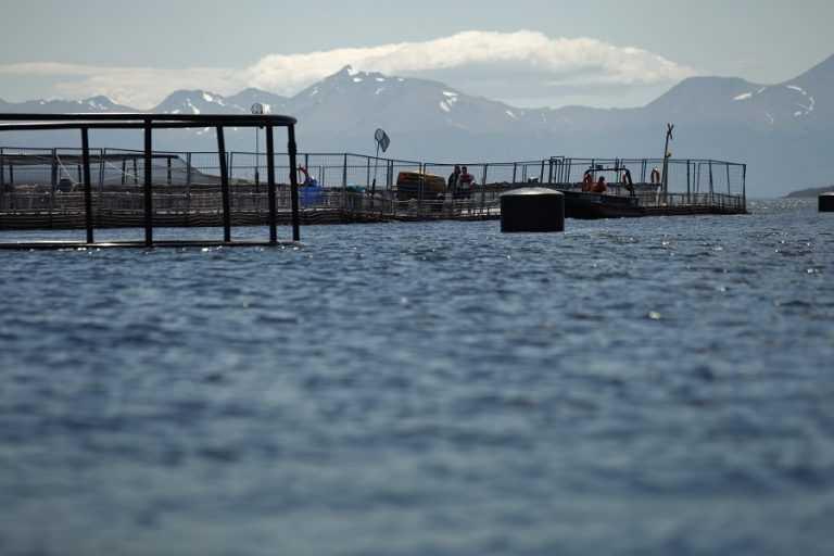 Sedimentos: Biotecnología como solución para recuperar fondos marinos