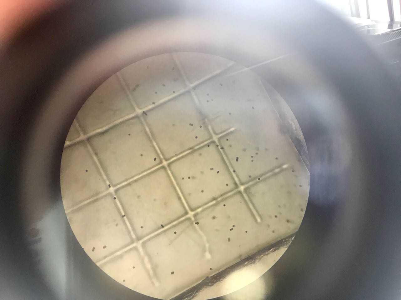 IFOP entrega resultados de estudio sobre floraciones de algas nocivas