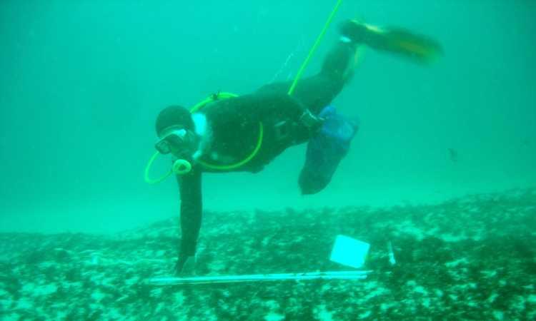 Subsecretaría automatiza trámites relacionados con pesca de investigación (foto Subpesca)