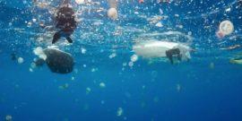 Contaminación en los océanos: Pesquera instala filtros en lavadoras
