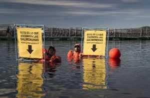 Para acuicultura: Los principales focos de las ONGs
