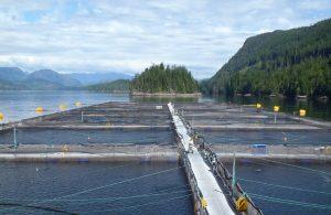 Cermaq busca incrementar su producción salmonicultora en Canadá
