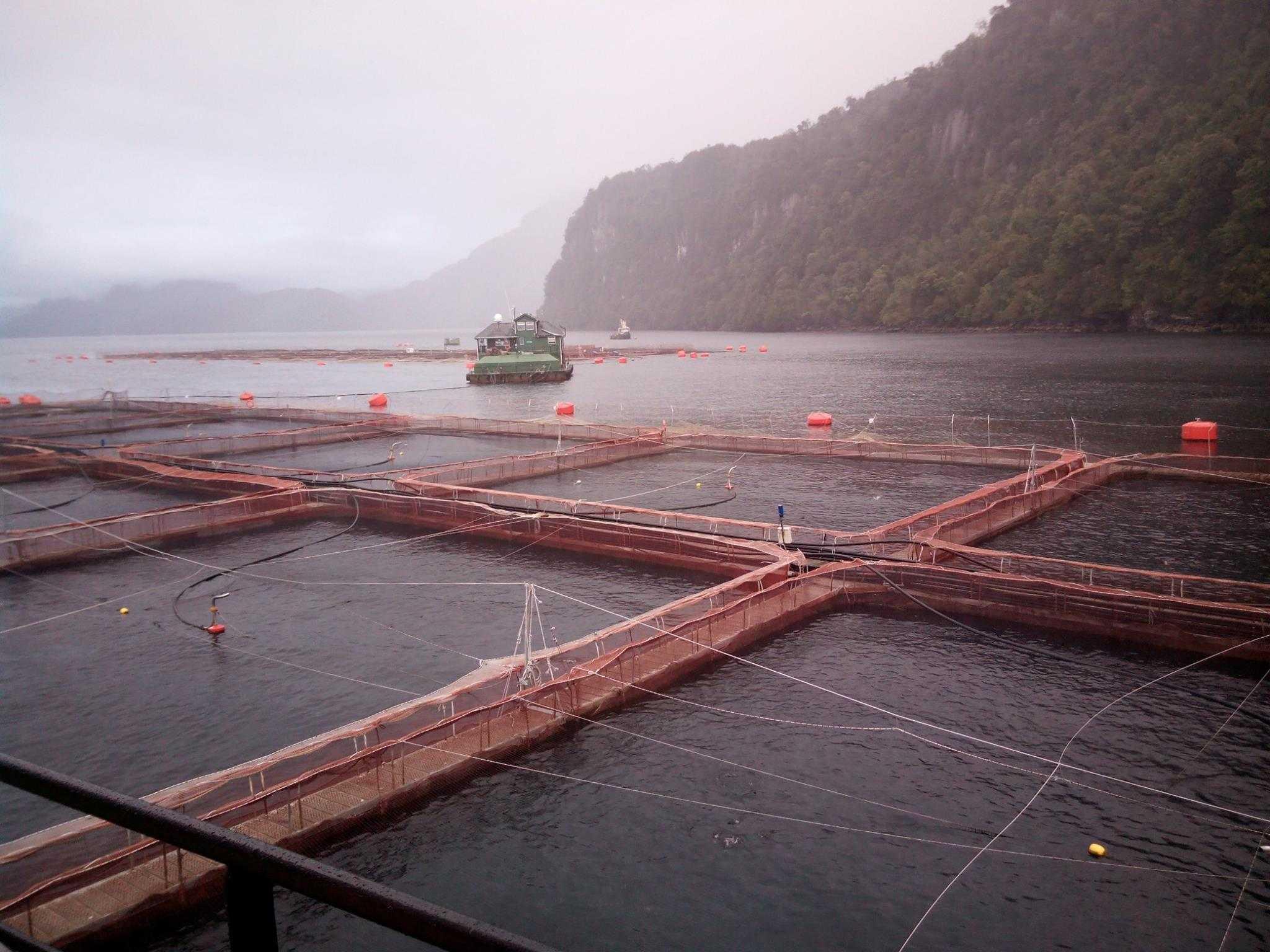 En salmonicultura: Firman acuerdo para potenciar la colaboración científica-tecnológica