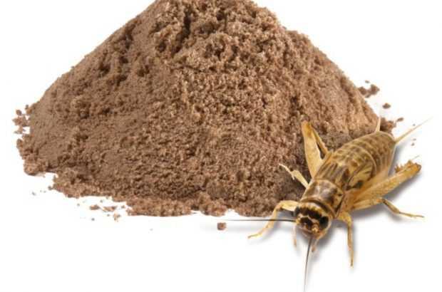 BioMar destaca resultados de la harina de insectos