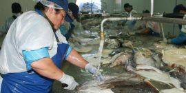 Por despidos: Fetrapes denuncia a la industria pesquera (foto: Asipes)