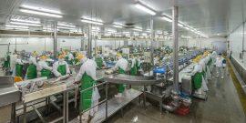 """Ferepa: """"Las plantas están adecuadas para procesar más de lo que ellos capturan"""" (foto: PacificBlu)"""