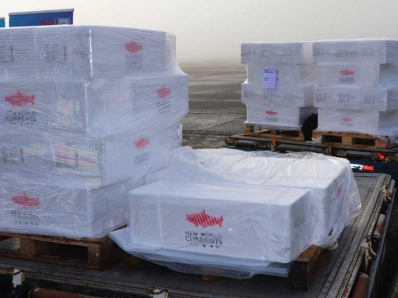 Ahondan en la relevancia de exportar salmón directamente desde Puerto Montt (fotos: Aduanas)