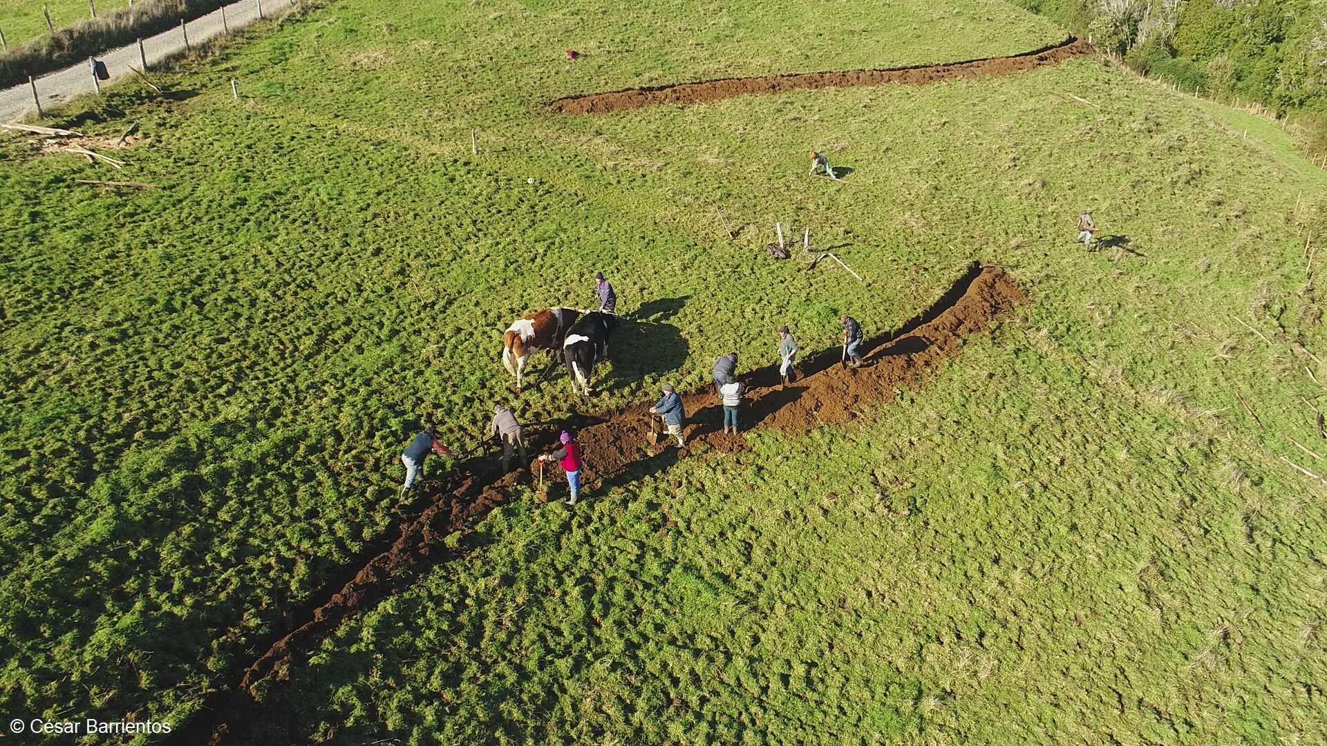 Cómo el uso sustentable del territorio devolvió el agua a comunidad rural de Chiloé