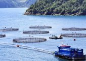 Camanchaca reduce en 5% sus proyecciones de cosechas de salmón