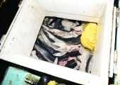 En Chile: Capturan dos embarcaciones peruanas con más de una tonelada de tiburones