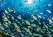 Chile bajo el mar, la nueva plataforma interactiva con la cual Oceana celebra diez años