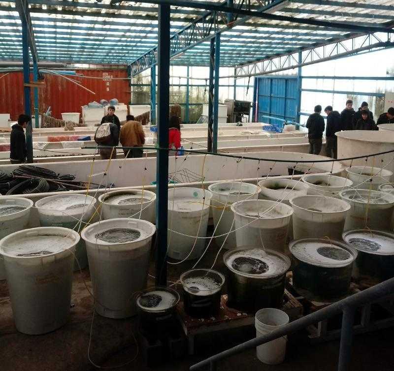 Estudiantes de Cochamó visitaron instalaciones de Fundación Chinquihue