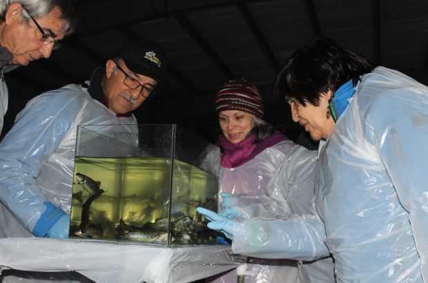 En fase de agua dulce: Vecinos de Punta Arenas conocieron cultivo de salmones