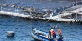 La trucha afecta los resultados financieros de Salmones Camanchaca