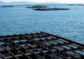 La marea roja obliga a cerrar el 80% de los polígonos de mejillón gallegos (archivo)