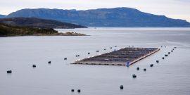 Evalúan el régimen jurídico-ambiental de la salmonicultura en Chile (Foto: Subpesca)