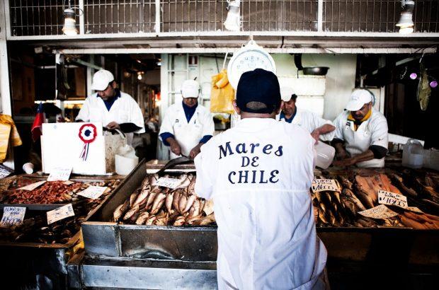 Seafood Expo: Pescado chileno recibe certificación internacional de sustentabilidad (en la foto: jurel)