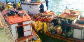 Los Lagos: Realizan talleres sobre mejoramiento del sector pesquero