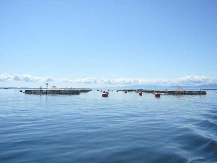 Habla equipo que encabezó estudio que cuestiona la acuicultura (foto: Centro IDEAL)
