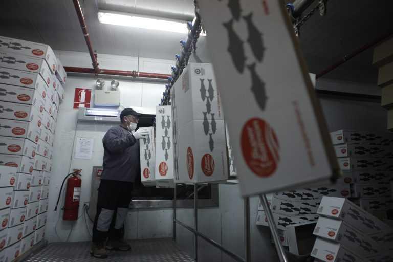 Agrosuper concentra casi la cuarta parte de todos los salmónidos exportados por Chileoto Editec)