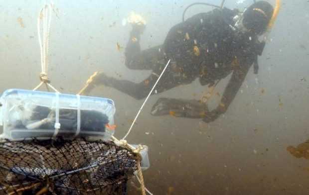 Algas: Estudian los efectos de la industria desalinizadora en ecosistemas marinos