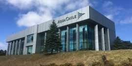 AquaChile entrega información por negocios con BioMar y Benchmark