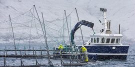 Bakkafrost considera cultivar salmones en alta mar (Créditos: Local.fo)