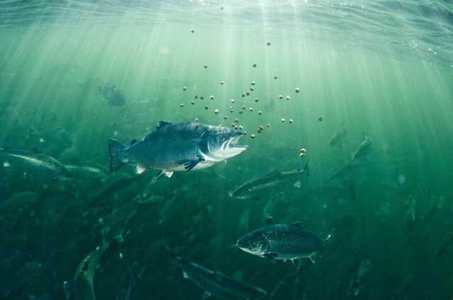 Cargill entrega resultados de encuesta sobre los principales desafíos de la acuicultura