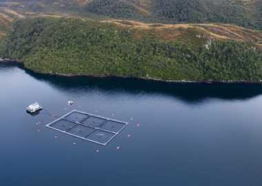 Nova Austral expresa su satisfacción por rechazo unánime a recurso interpuesto por Greenpeace (foto: Salmonicultores de Magallanes)