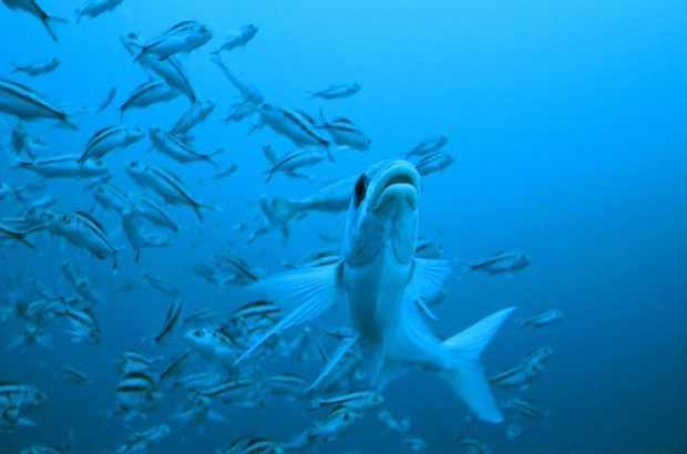 El cambio climático amenaza a la biota de todos los océanos (Créditos Alex Muñoz de Oceana)