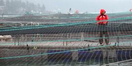 Detallan el estado de las certificaciones en pesca y acuicultura (foto: Cooke Aquaculture Pacific)