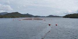 Sernapesca detalla el estadio sanitario de la industria del salmón