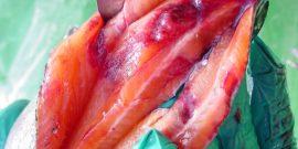 Expondrán novedades sobre enfermedades co-ocurrentes en salmonicultura