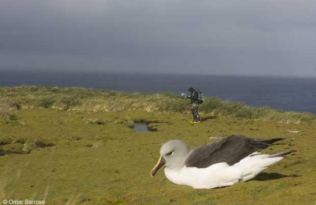 Científico y albatros cabeza gris en isla Diego Ramírez (Foto: Omar Barroso)
