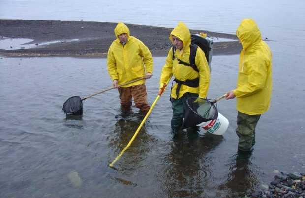 Trabajos de investigación del i~mar
