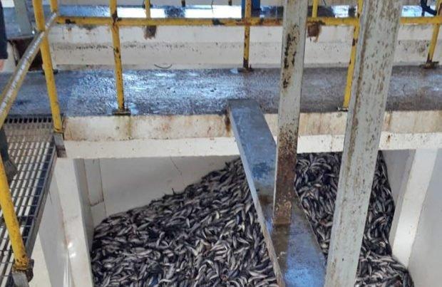 Formulan cargos contra pesquera FoodCorp
