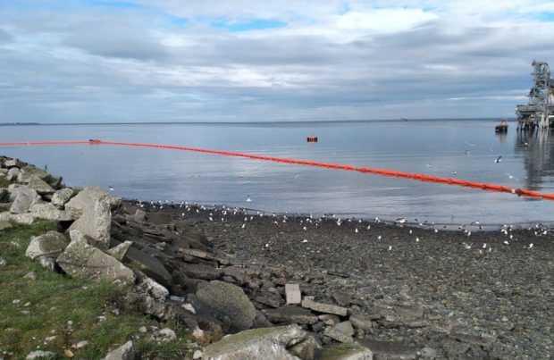 Cabo Froward considera que no hay daño ambiental tras hundimiento de muelle en Calbuco