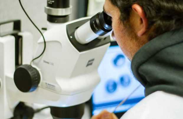 "UdeC se adjudica Fondef IDeA para desarrollar ""ZebraMarTox"""