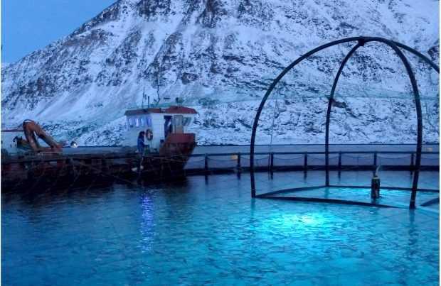 Signify y ScaleAQ anuncian acuerdo en salmonicultura