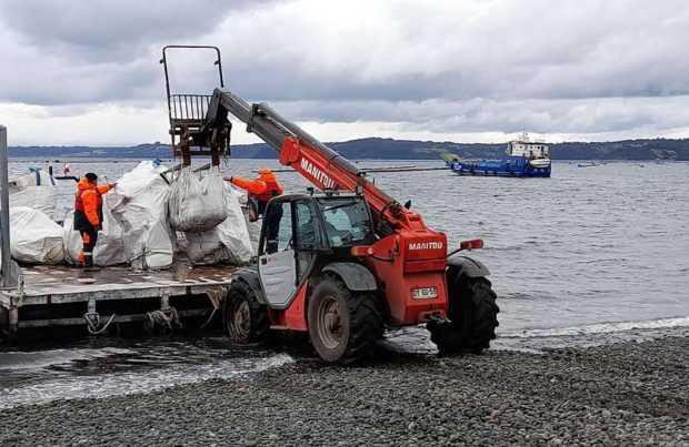 Mitilicultores limpian playas en Dalcahue y Puqueldón
