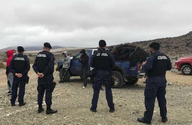 Operativo conjunto permitió incautar una tonelada de huiro en Huasco