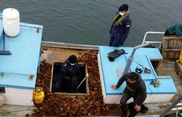 Chiloé: Detectan hurto de 100 kilos de erizo en área de manejo de Ancud