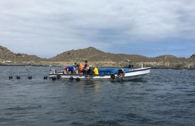 Acuicultura de pequeña escala, algas, borde costero, desembarque, botes, pescadores artesanales (foto Indespa)
