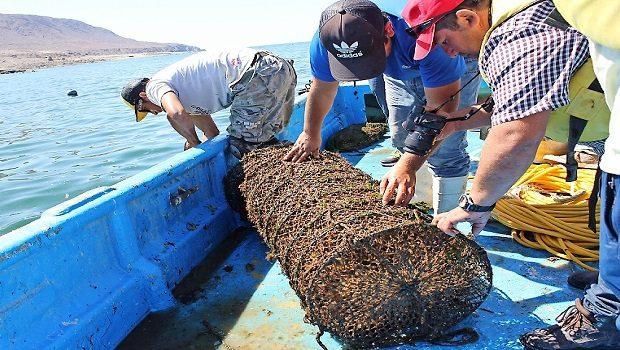 Acuicultura de pequeña escala, algas, borde costero, desembarque, botes, pescadores artesanales (foto Indespa)2